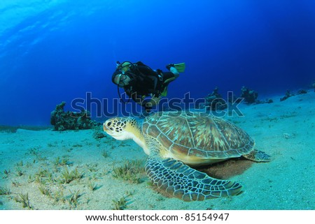 Scuba Diver and Green Sea Turtle in the Red Sea, Egypt - stock photo