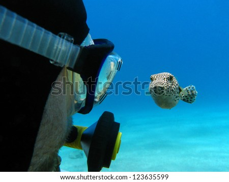 scuba diver and pufferfish - stock photo