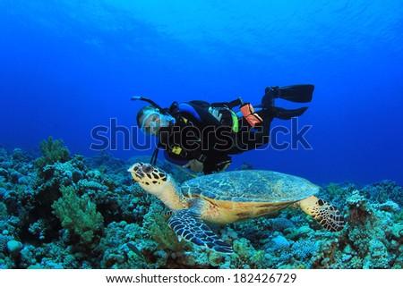 Scuba Diver and Sea Turtle - stock photo