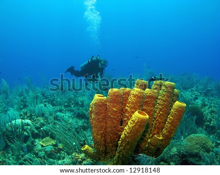 Scuba Diver and Yellow Tube Sponge in Cayman Brac