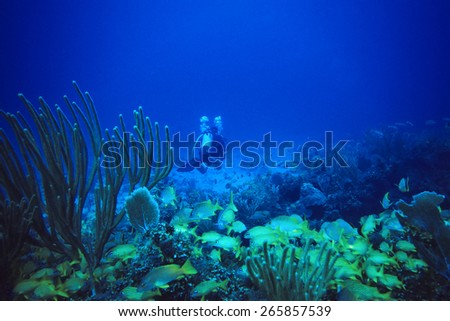 Scuba Diver at caribbean Coral Reef with Swarm of Snappers - stock photo