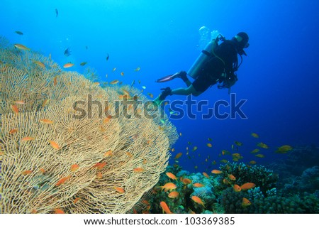 Scuba Diver, Coral Reef and Tropical Fish in the Red Sea