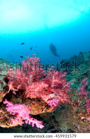 Scuba diver diving on a colorful tropical Coral Reef , north andaman, Thailand