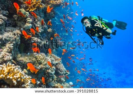 Scuba diver explore a coral reef showing ok sign - stock photo