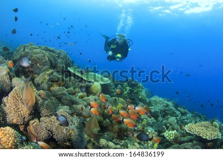 Scuba Diver explores coral reef underwater - stock photo