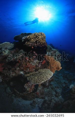 Scuba diver explores tropical coral reef - stock photo