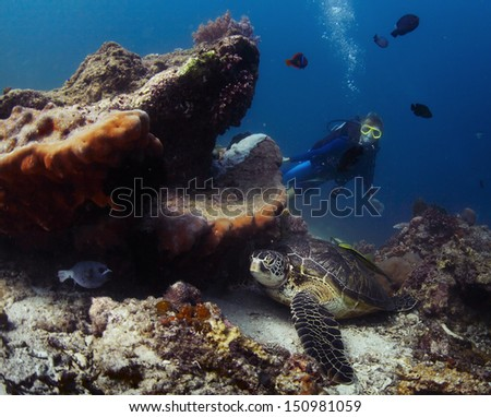Scuba diver exploring coral reef with abundance of marine life - stock photo