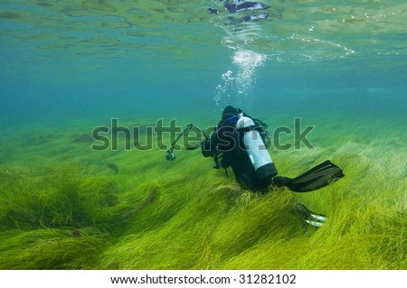 Scuba diver in shallows of thick sea grass - stock photo