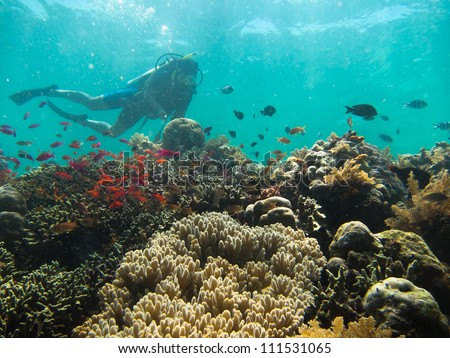 Scuba diver in silhouette swimming above the coral garden, in the rays background - stock photo