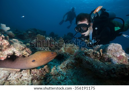 Scuba diver looking at a Giant moray eel - stock photo