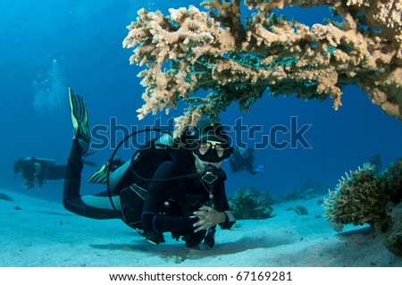 scuba diver looks underneath a table coral - stock photo
