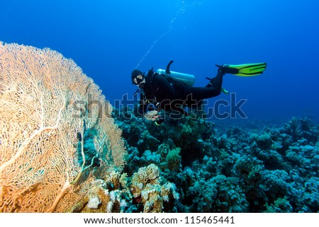 SCUBA diver next to a large sea fan on a tropical coral reef - stock photo