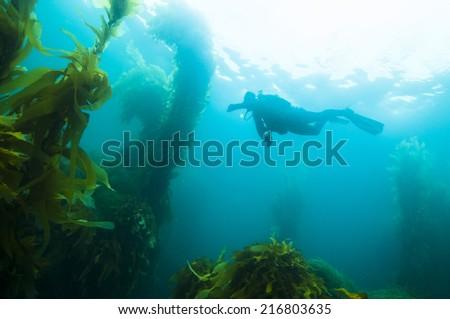 Scuba Diver off San Clemente island, CA - stock photo