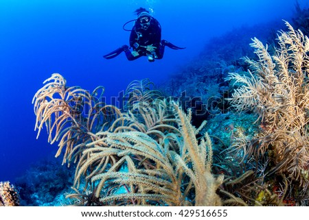SCUBA diver on a tropical coral reef - stock photo