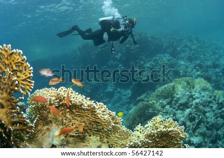 scuba diver on coral reef - stock photo