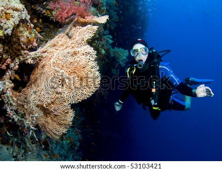 scuba diver on wall with big fan coral