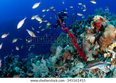SCUBA diver swimming on a colorful tropical coral reef - stock photo