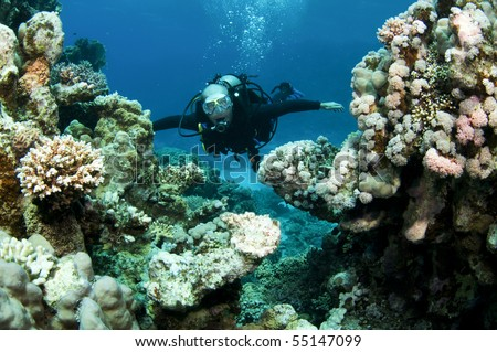 scuba diver swims on pristine coral reef in red sea - stock photo