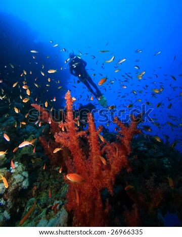 Scuba Diver swims over Coral Reef - stock photo