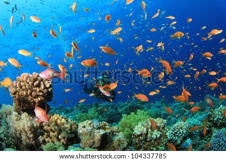 Scuba Diver swims through cloud of tropical fish on coral reef in the Red Sea - stock photo