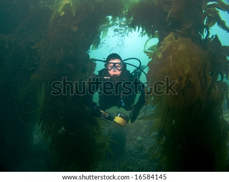 Scuba Diver swims through the Kelp towards the Camera - stock photo