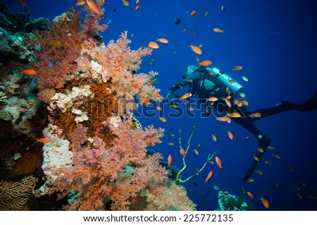 Scuba Diver, Tropical Fish and Coral Reef on Red Sea - stock photo