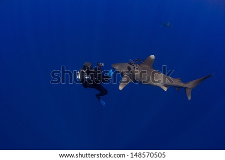 SCUBA Diver with an Oceanic Whitetip in the Bahamas with Bottomless Blue Water - stock photo