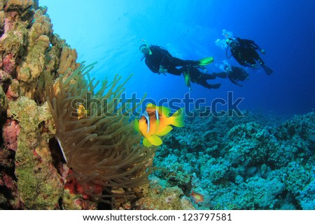 Scuba Divers and Anemonefish - stock photo