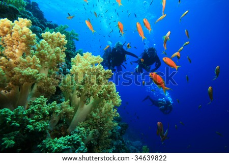 Scuba Divers and Coral Reef - stock photo
