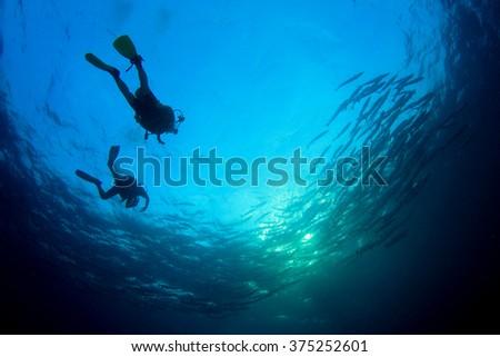 Scuba divers and shoal of barracuda fish - stock photo