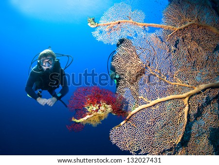 Scuba divers by coral reef - stock photo