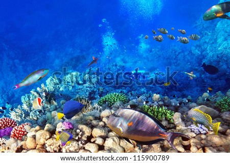 Scuba divers, coral and fish in the Red Sea.Egypt