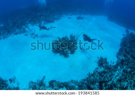 Scuba divers explore a sand bottom surrounded by coral reef on the island of Grand Cayman. This Caribbean island is a popular destination for diving, snorkeling, and beach lovers. - stock photo