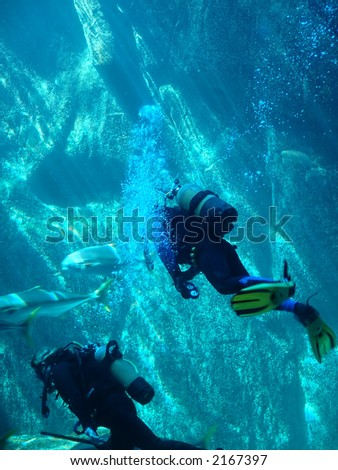 scuba divers in Cape Town ,South Africa - stock photo