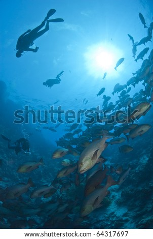 Scuba divers silhouettes and school of Twinspot snapper (lutjanus bohar). Shark reef, Ras Mohamed national Park, Red Sea, Egypt.