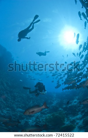 Scuba divers silhouettes and school of Twinspot snapper (lutjanus bohar). Shark reef, Ras Mohamed national Park, Red Sea, Egypt. - stock photo