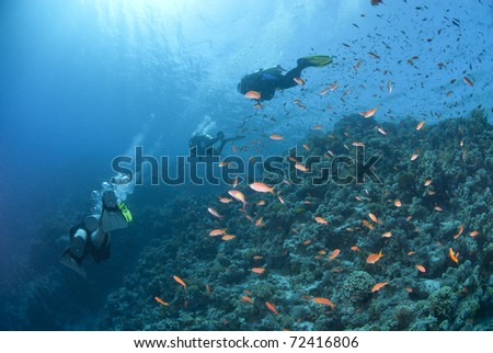 Scuba divers silhouettes over a tropical coral reef with Anthias. Jackson reef, Straits of Tiran, Red Sea, Egypt.
