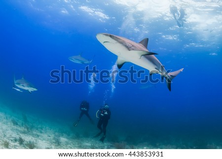 SCUBA divers surrounded by sharks - stock photo