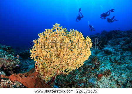 SCUBA divers swim over a deep water coral - stock photo