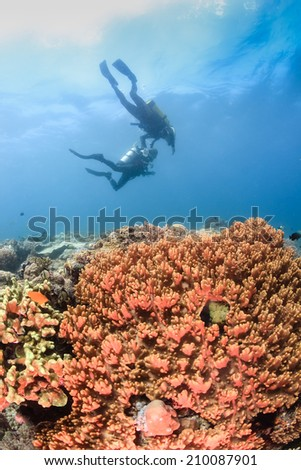 SCUBA divers swimming over a tropical coral reef - stock photo