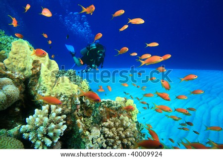 Scuba diving beside a coral reef - stock photo