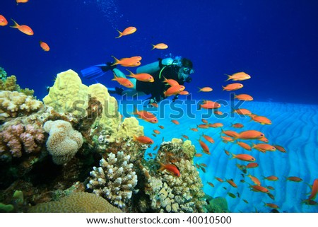 Scuba Diving in the coral ocean - stock photo