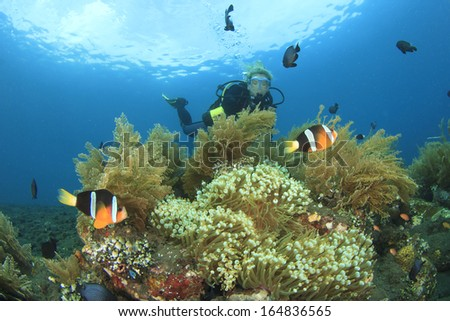 Scuba Diving on a coral reef with Anemones and Clownfish - stock photo