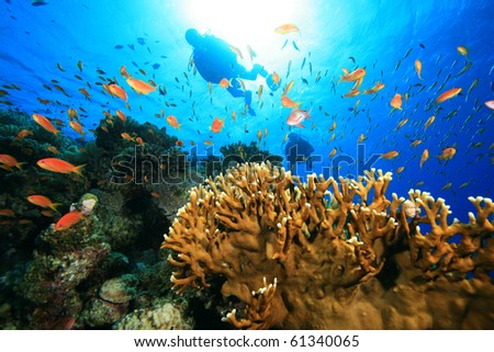Scuba Diving on a coral reef with tropical fish - stock photo