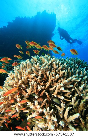 Scuba Diving over a beautiful coral reef - stock photo