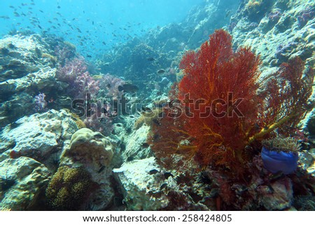 scuba diving the coral reef in Phuket,Thailand - stock photo