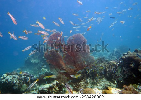 scuba diving the coral reef in Phuket,Thailand