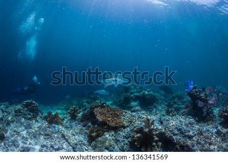 scuba diving with grunts fish - stock photo