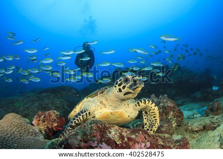 Scuba diving with sea turtle - stock photo