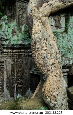 sculpture on the wall and root of tree, Ta Phrom, Siem Reap - stock photo